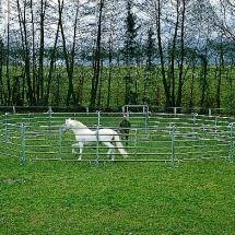 Rond de longe galvanisé pour chevaux